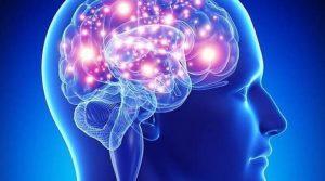 memoria2013-09-05-proteina-cerebro-longevidad-644x362